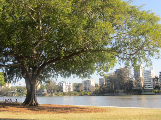 A picture of St Lucia from Orleigh Park in Brisbane.