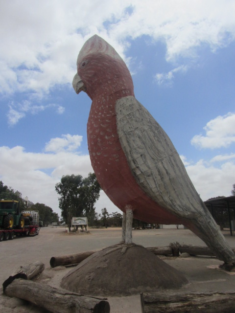 A picture of a  giant bird between Port Augusta, South Australia, and Ceduna.