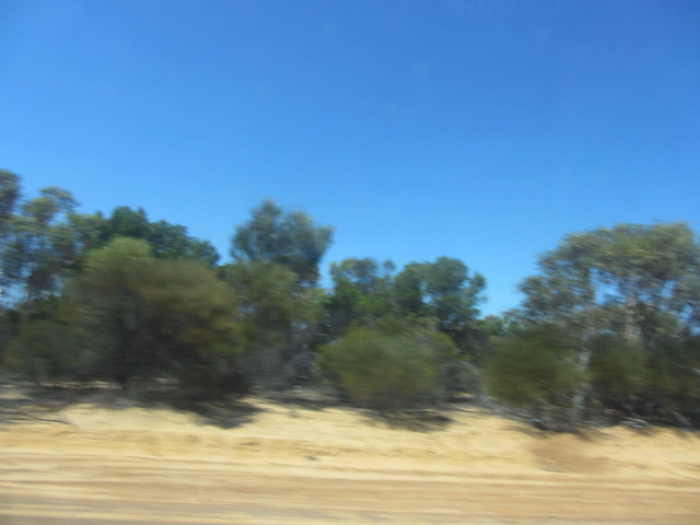 A picture of the shrubs growing along the road to Perth, just past Norseman.