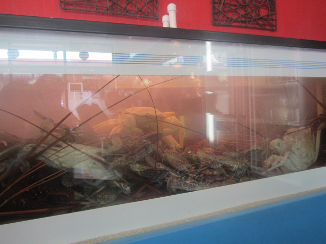 A picture of the crabs in a tank in a restaurant in Northbridge, Perth.