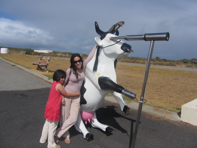We're with Mr Cow, enjoying the vistas of the magnificent Cape.